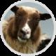 Beginners Javascript